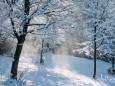 winterlandschaft-mariazellerland-11122020-0173