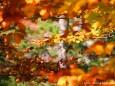 Herbstlaub - Foto: Maria Habertheuer