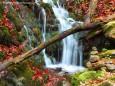 Herbstwasserfall - Foto: Maria Habertheuer