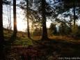 Sonnenwald - Foto: Maria Habertheuer