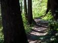 Waldweg Richtung Annaburg