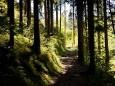Waldweg in die Salzaklamm