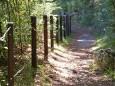 Waldweg Richtung Gußwerk