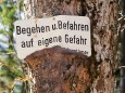 Mariazell im Herbst Ende Oktober/Anfang November 2011 - Dieser Baum steht am Weg zur Fotoposition
