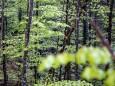 marienstein-naturpark-oetscher-tormaeuer-4341
