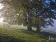 mariazell-stehralm-morgennebel-berge-mit-schnee-27sept2020-6840