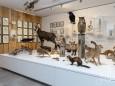 naturkundemuseum-mariazell-26529