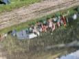 naturparkfest-oetscherbasis-wienerbruck-41634