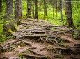 Wandertour vom Niederalpl über Ochschenboden-Herrenboden-Mooshuben nach Mariazell
