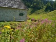 HERRENALM -Lunzersee – Mittersee – Obersee – Herrenalm – Wandertour Fotos