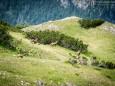 Gamsrudel  am Gipfelplateau - Brunnsee auf die Riegerin - Bergtour - 3.Juli 2014
