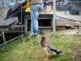 Musik interessierte Ente - Rock den Berg auf der Mariazeller Bürgeralpe 2014