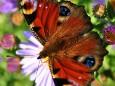 Romana Reithner - Schmetterling