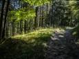 Waldweg hinauf um den Rundweg zu folgen - Roßlochklamm zwischen Frein und Mürzsteg