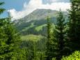 Blick zur Hohen Veitsch - Wanderung Rotsohlalm - Turnauer Alm - Turntaler Kogel