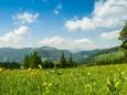 TURNAUER ALM - Wanderung Rotsohlalm - Turnauer Alm - Turntaler Kogel