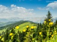 Blick zum Hochschwab vom Turntaler Kogel - Wanderung Rotsohlalm - Turnauer Alm - Turntaler Kogel