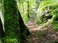 Salzaklamm Wanderung - Herrlicher Waldweg
