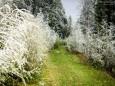 Nicht alles was weiß ist sind Blüten ;-) - Sauwand (1420 m) – Rundwanderung im Mariazellerland