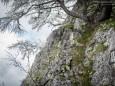 """Petergstamm und """"Schneeblüte"""" auf den Bäumen  - Sauwand (1420 m) – Rundwanderung im Mariazellerland"""