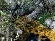schwarzwalster-mariazellerland-hubertussee-rundwanderung-3979