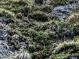 schwarzwalster-mariazellerland-hubertussee-rundwanderung-4010