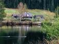 schwarzwalster-mariazellerland-hubertussee-rundwanderung-4050