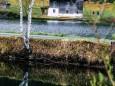 schwarzwalster-mariazellerland-hubertussee-rundwanderung-4054