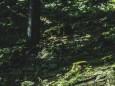 seeleiten-graualm-brandhof-hochschwab-mariazell-4517