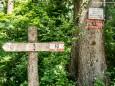 Von Erlaufboden nach Gösing - Wanderung zum Trefflingfall im Naturpark Ötscher-Tormäuer
