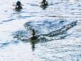winterwanderung-walstern-hubertussee-19022018-3807