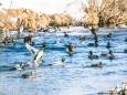 winterwanderung-walstern-hubertussee-19022018-3850
