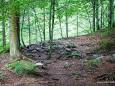 Waldweg zum Einstieg in die Wasserloch Klamm