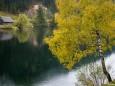 Weisenblasen 2012 in der Walstern am Hubertussee