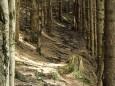 Kurzer Waldpfadabschnitt / Lahnsattel - Wildalm Hütte - Wildalpe - retour