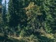 zeller-staritzen-zinken-1619-m-4818