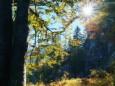 ABSTIEG VORDERÖTSCHER - Wanderung - Zellerrain - Vorderötscher - Ötschergräben - Stausee - Mitterbach