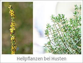 Heilpflanzen-bei-Husten
