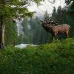 Martin Prumetz - Ein Jäger auf Fotopirsch
