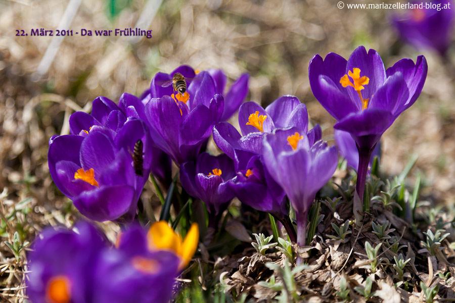 22. März 2011 - Frühling