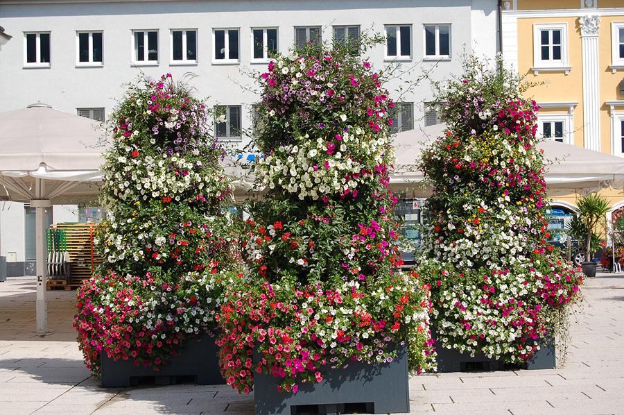 So können die Blumen bei richtiger Pflege werden.