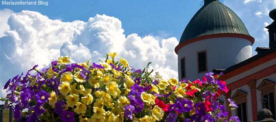 Blumen-Mariazell_Titel