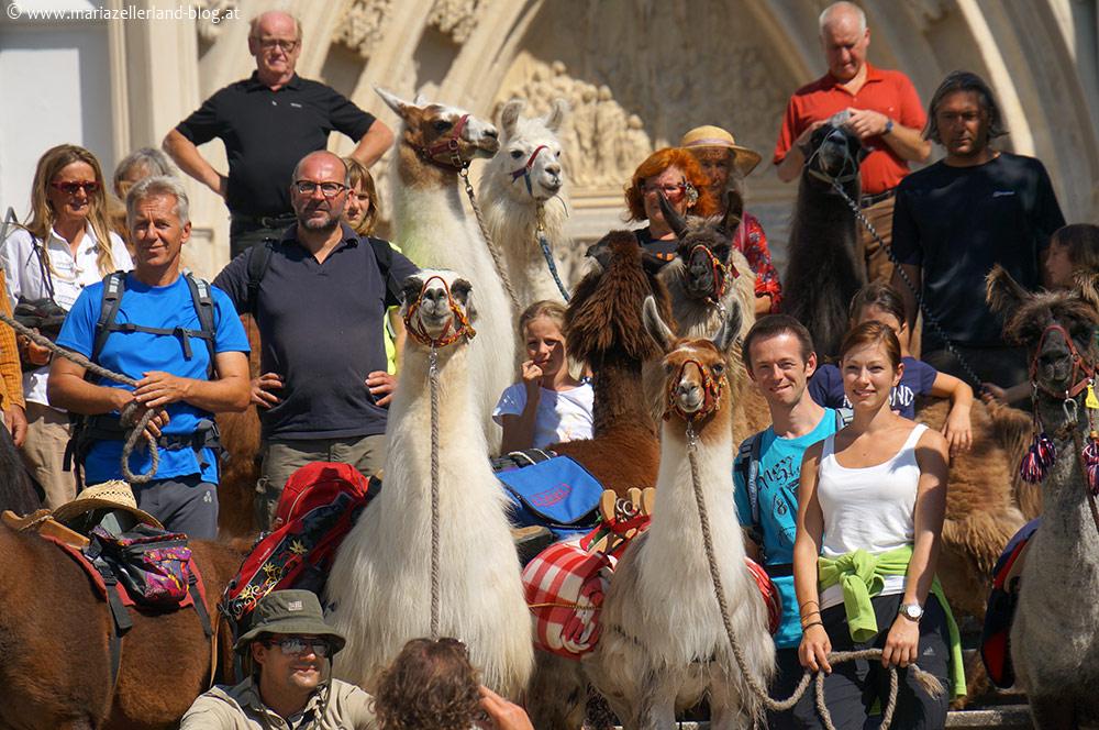 Lama-Trekking-Mariazell_DSC01559
