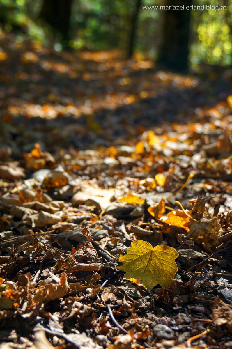 Goldener_Herbst_Mariazell_DSC02201