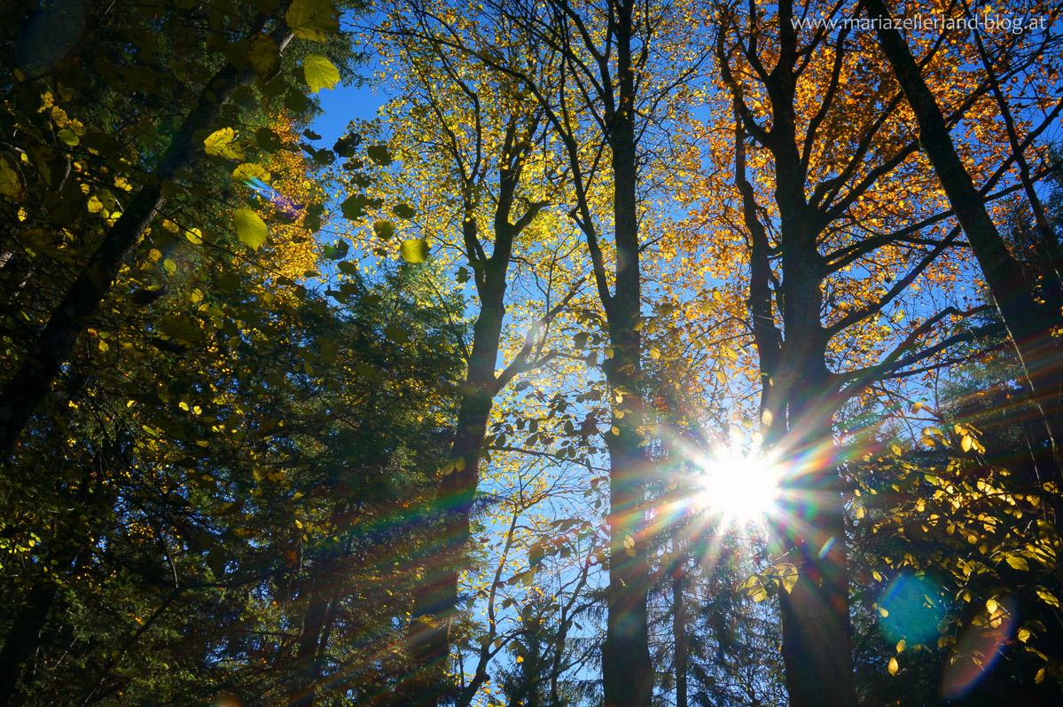 Goldener_Herbst_Mariazell_DSC02204