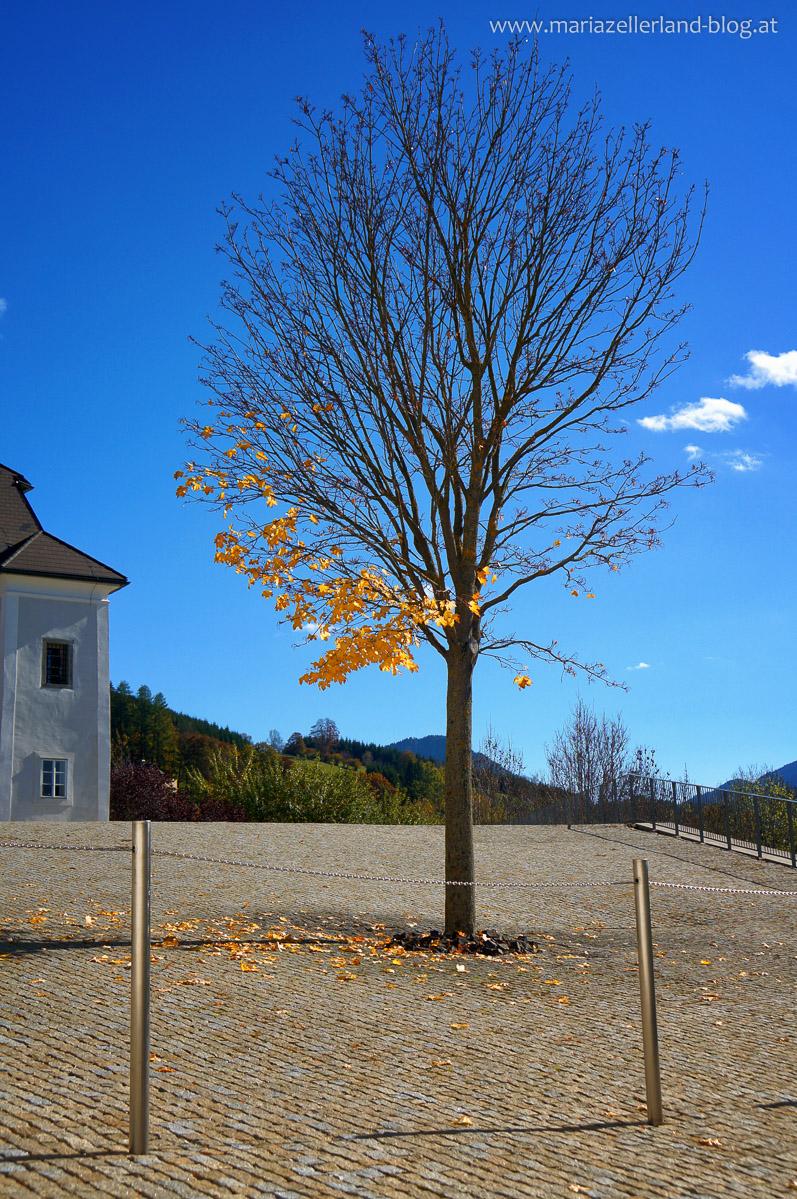 Goldener_Herbst_Mariazell_DSC02209