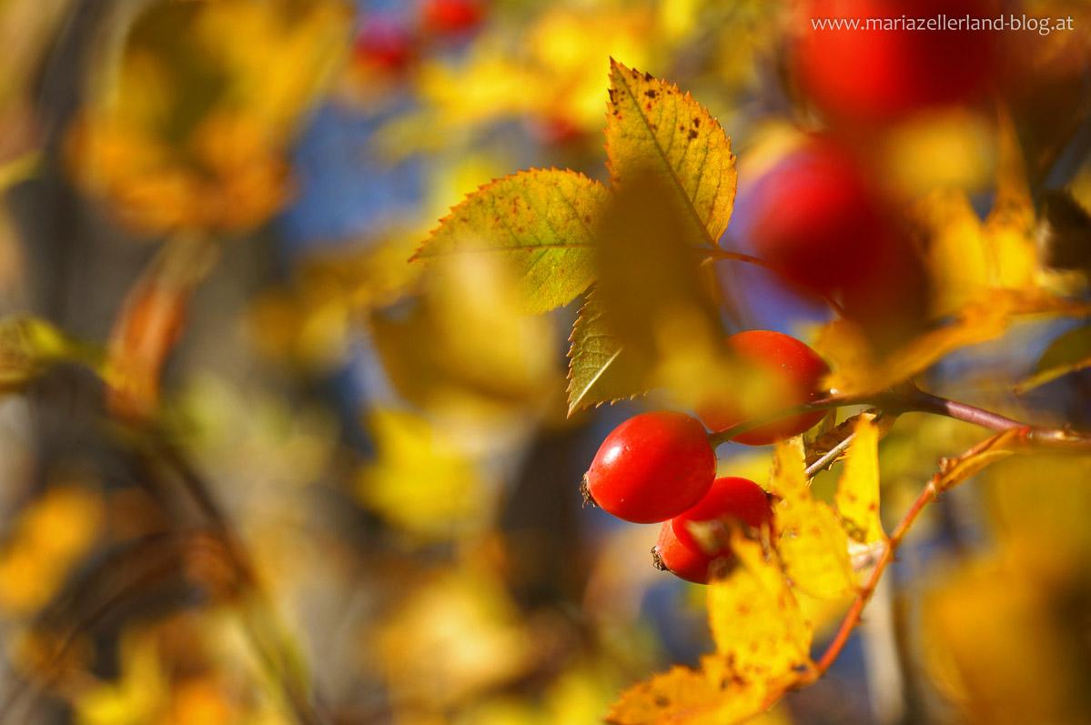 Goldener_Herbst_Mariazell_DSC02218