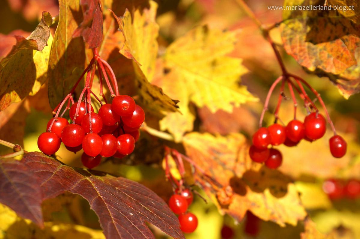 Goldener_Herbst_Mariazell_DSC02221