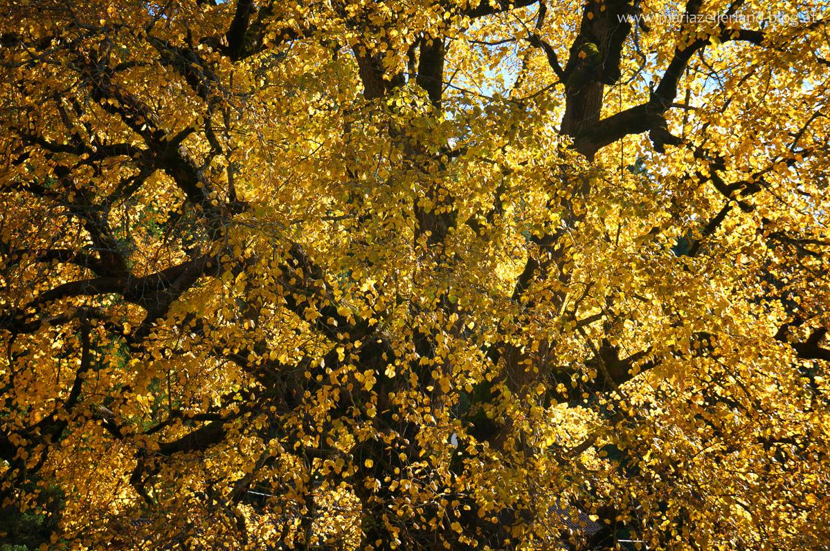 Goldener_Herbst_Mariazell_DSC02222