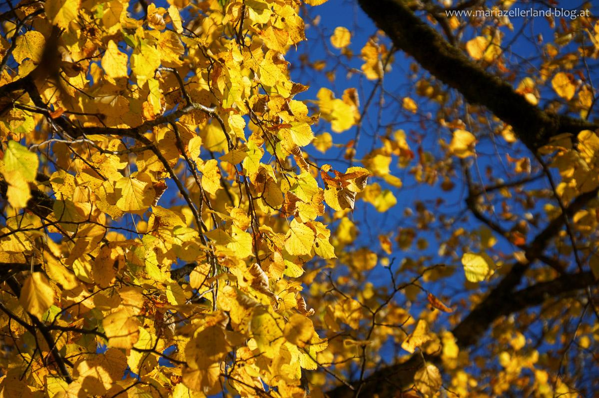 Goldener_Herbst_Mariazell_DSC02225